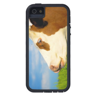 Brown white cow looking straight ahead. case for iPhone 5/5S