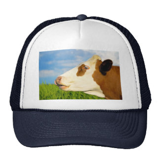 Brown white cow looking straight ahead hat