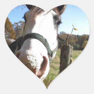 Brown White horse w wildflower Sticker