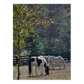 Brown &White Painted Horse and Cream Horse Postcard