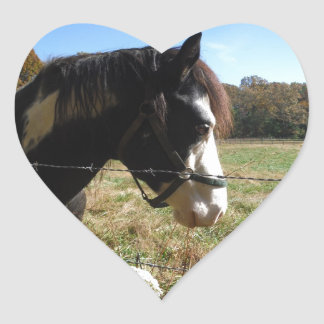 Brown &White, Painted Horse, Queen Ann Lace flower Heart Stickers