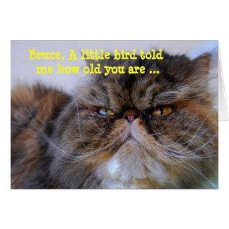 Bruce Happy Birthday Humor Calico Persian Kitty Card
