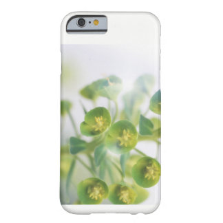 Bruces's Dwarf Flowers Barely There iPhone 6 Case