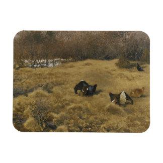 Bruno Liljefors - Black Grouse Displaying Rectangular Photo Magnet