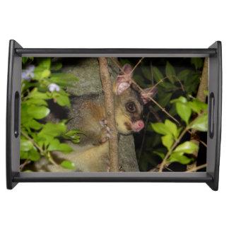 Brushtail Possum Serving Tray