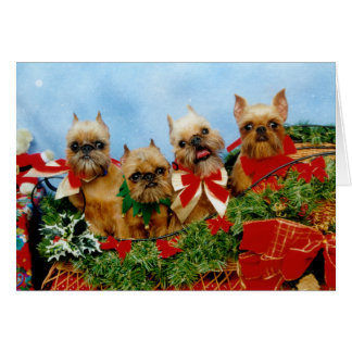 Brussells Griffon Dog Christmas Card