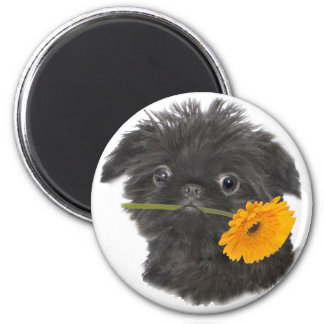 Brussels Griffon Holds Daisy magnet