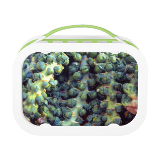 Brussels Sprouts Lunch Box