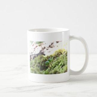 Bryophyta Umbrellas Coffee Mug