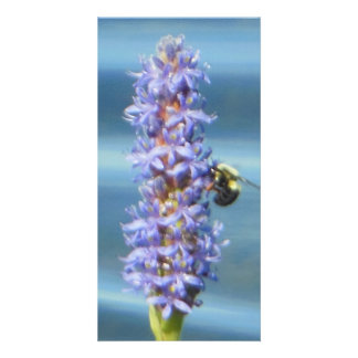 Bubble Bee Resting on Aquatic Pickerelweed Card Personalized Photo Card