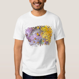 Bubbles abstract with flowers. Credit as: Nancy Shirts