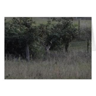 Buck Deer & Fence Row Card