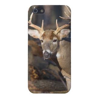 Buck Deer iPhone 5/5S Case