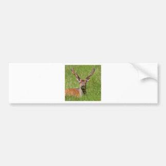 Buck fallow deer in grass bumper sticker