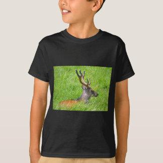 Buck fallow deer in grass T-Shirt