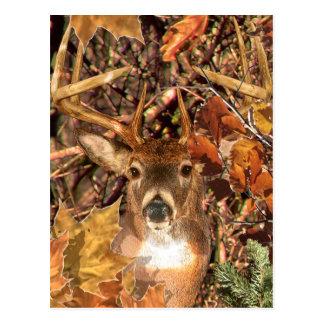 Buck in Camo White Tail Deer Postcard
