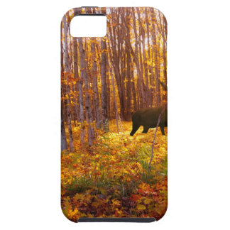 Buck in the Trees iPhone 5 Cover
