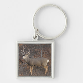 Buck Key Ring