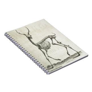 Buck Skeleton Notebooks
