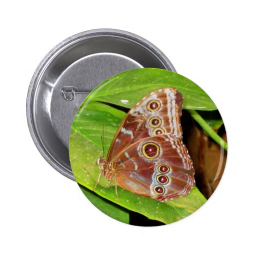 Buckeye Butterfly Button Wings Pin