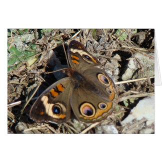 Buckeye Butterfly Card