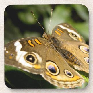 Buckeye Butterfly Coasters