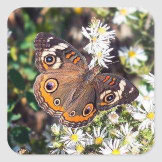 Buckeye Butterfly Sticker