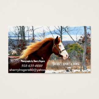 """ Buckie""  Adopt a horse Business Card"