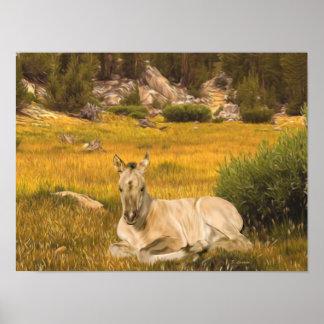 Buckskin Horse Foal Portrait Poster