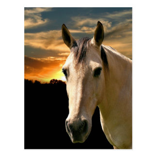 Buckskin horse sunset postcard