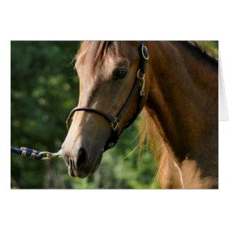 Buckskin Morgan Horse Greeting Card