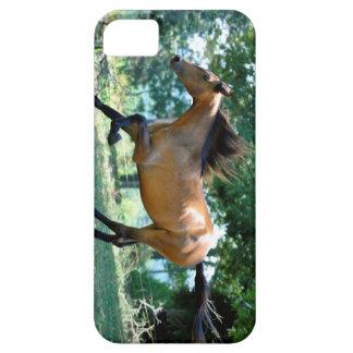 Buckskin Morgan Horse iPhone 5 Cover