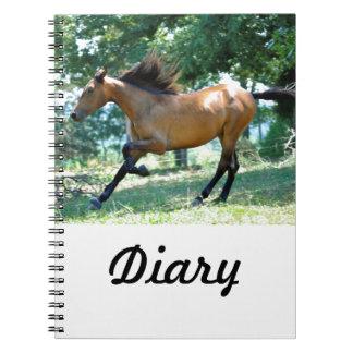 Buckskin Morgan Horse Notebooks