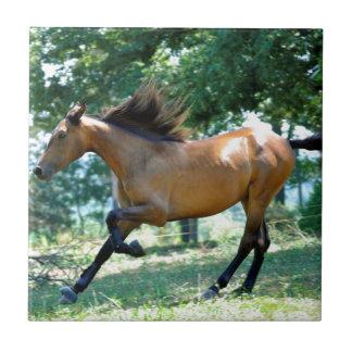 Buckskin Morgan Horse Small Square Tile