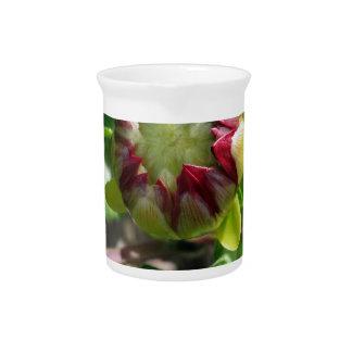 bud in autumn pitcher