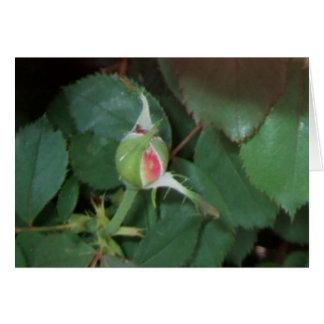 """BUD"" ~ (Rose 4) ~ Greeting Card"