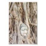 Buddha Head in Overgrown Tree Photo
