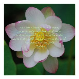 Lotus flower quote gifts on zazzle au buddha quote lotus flower poster mightylinksfo