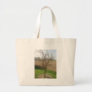 Budding pomegranate tree in spring large tote bag
