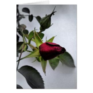 BUDDING ROSE! GREETING CARD