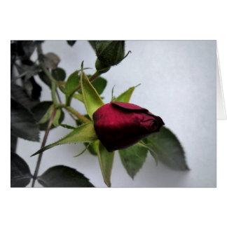 BUDDING ROSE! GREETING CARDS