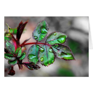 Budding Rose Leaves with Water Droplets Card