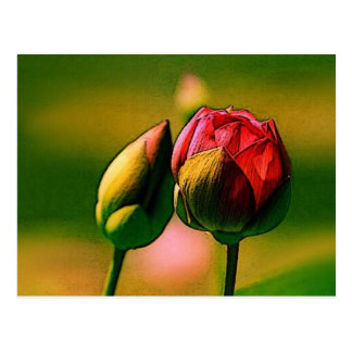 Budding Rose Postcard