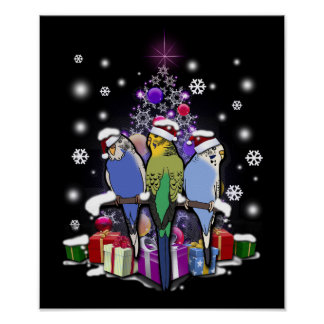 Budgerigars with Christmas Gift and Snowflakes Poster