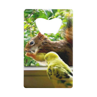 Budgie and Red Squirrel