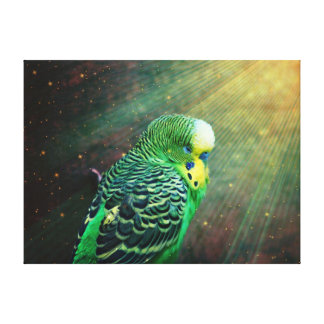 Budgie Stretched Canvas Prints
