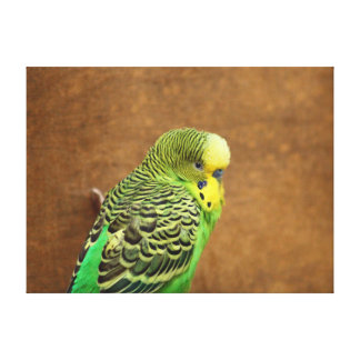 Budgie Stretched Canvas Print
