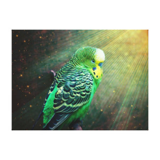 Budgie Gallery Wrapped Canvas