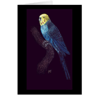 Budgie in color card
