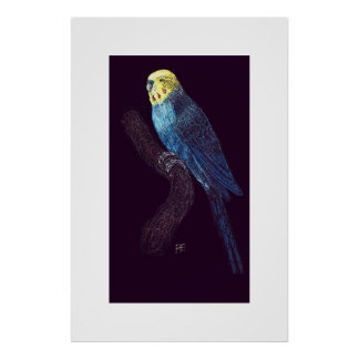 Budgie on a branch poster